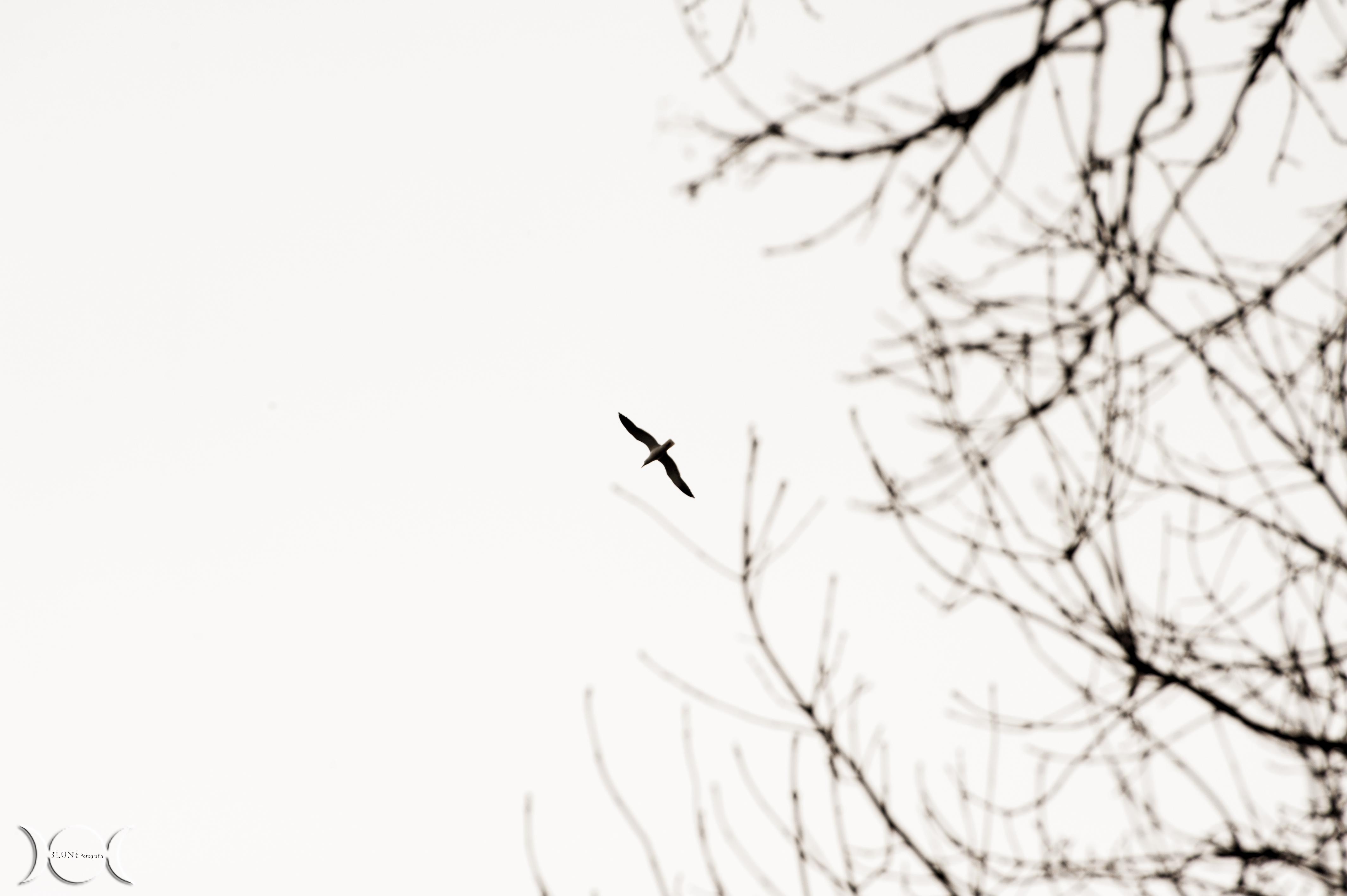 albero14