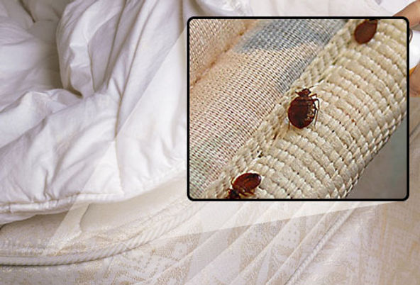 webmd_rf_photo_of_bedbugs_on_mattress.jpg