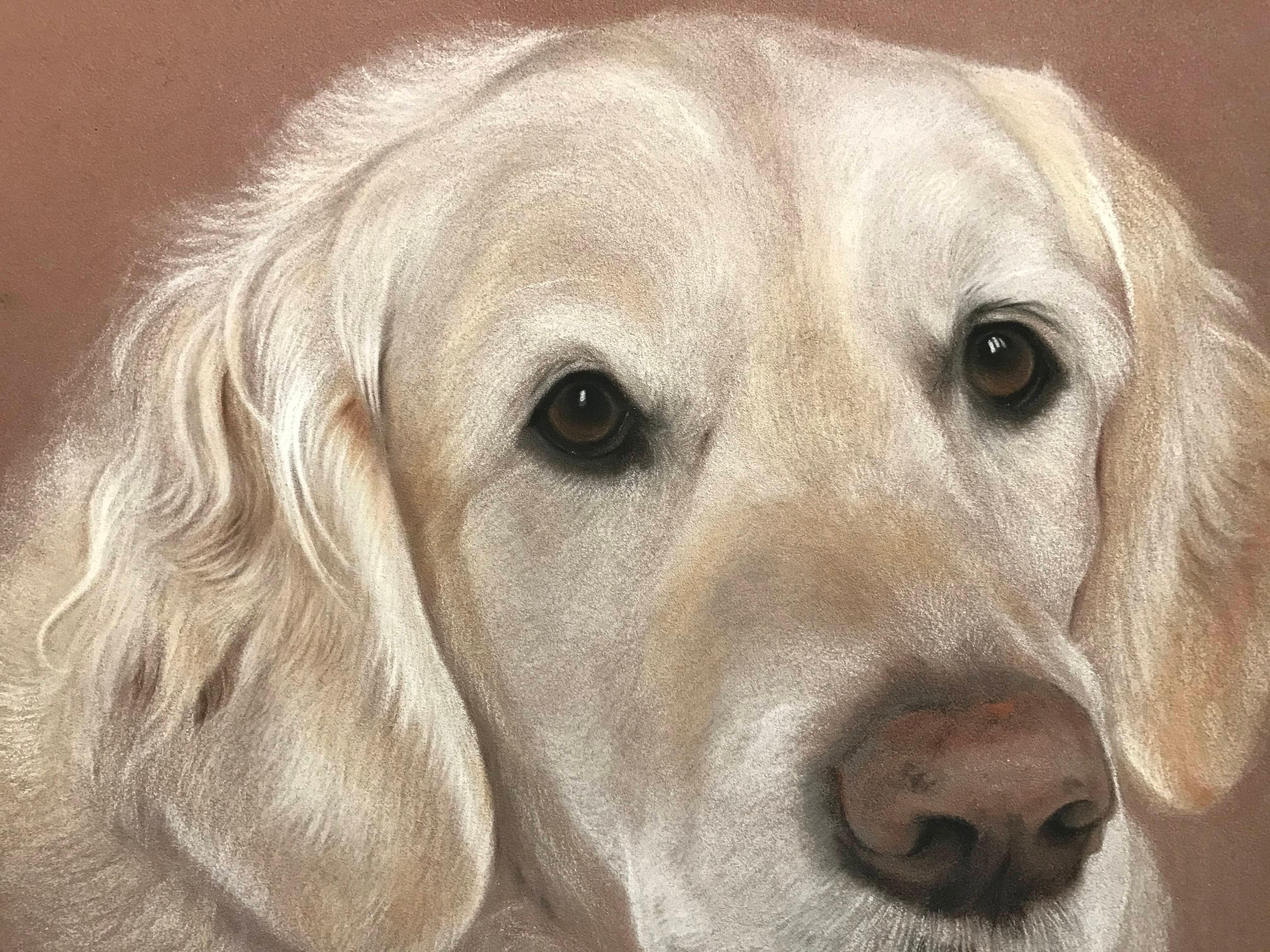 Animal Portraiture in Pastels