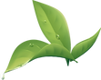 plant-1443482_1920.png