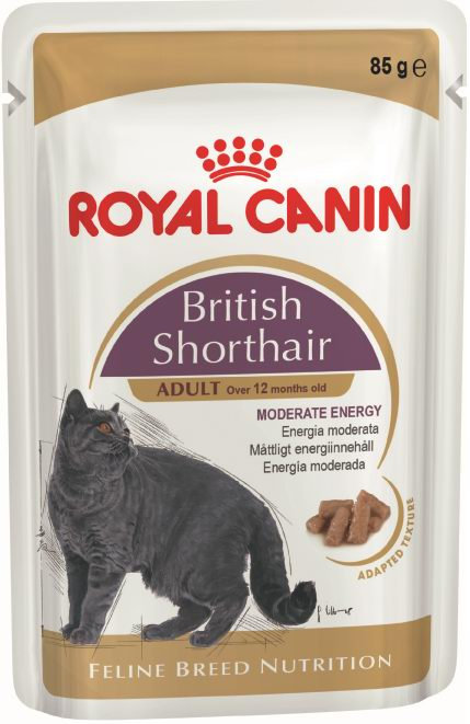 BRITISH SHORTHAIR ADULT (СОУС)