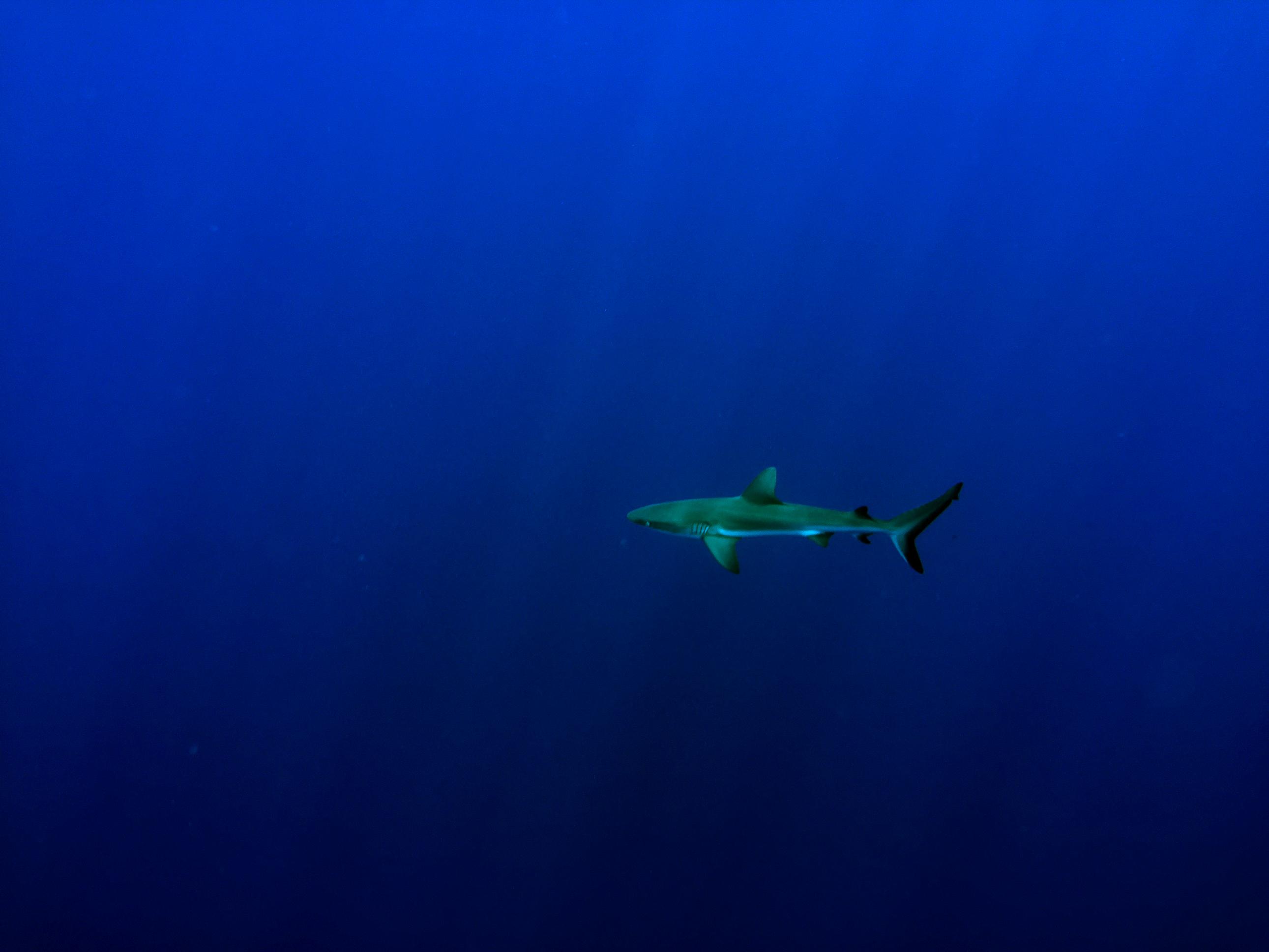 Lone Shark