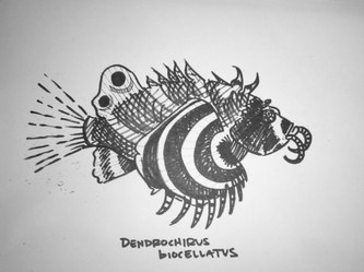 Dendrochirus biocellatus