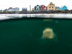 Iceland18-8.jpg