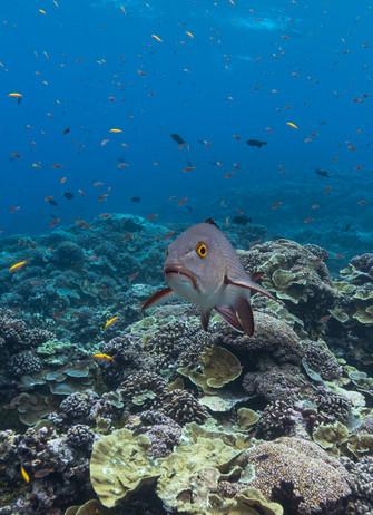 Kiribatis.jpg