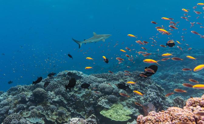 Kiribati18-35.jpg