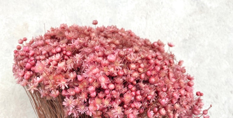 Pink Marcela Misty