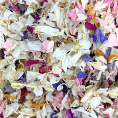 Delphinium rainbow mix