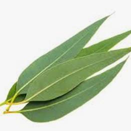 Eucalyptus Liquid Flavoring