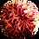 Thumbnail: CYCO POTASH 1L / 5L / 20L