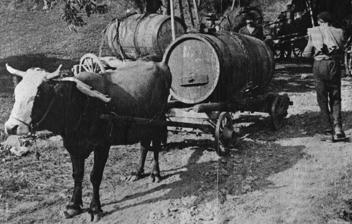 Grapes being transported in barrels