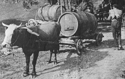 Transport des raisins