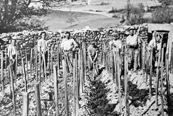 Piocher la terre 1946