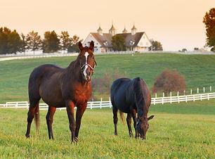 Horses Luxury Barn.jpeg