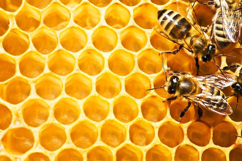 bees-honeycomb-island-desibantu.jpg