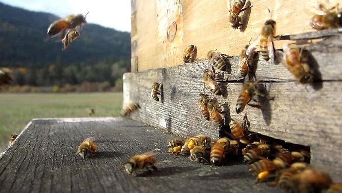 bee-passion.jpg