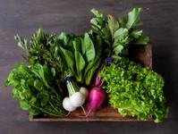 FIO 野菜