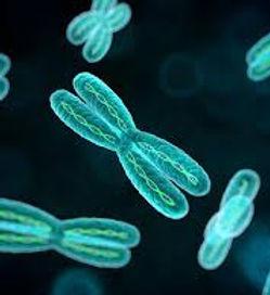 Heredity & Genetics   Onymous