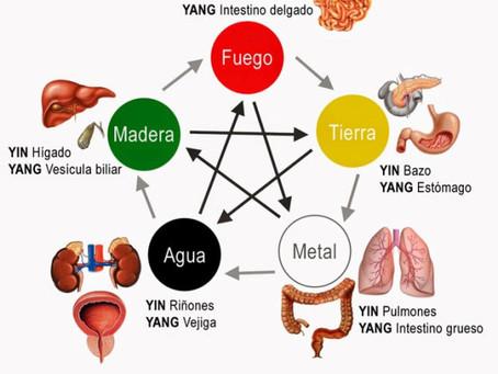 Conheça mais sobre a Fisiologia Energética