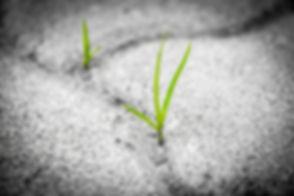 grass-1913167_1280.webp