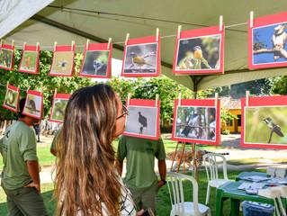 Cidade Histórica recebe 2º Festival de Aves de Porto Seguro