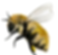 bee.PNG (1)_edited_edited.png