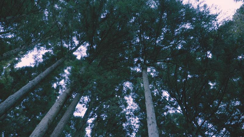 Panorama-8.png