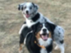 ME-Braver Hund-web.jpeg