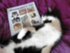 Printmakers Cat