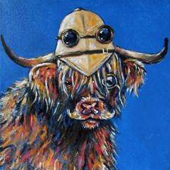 Explorer Cow