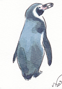 ACEO+Penguin+Pose.jpg
