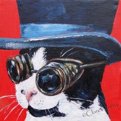 Topper Kitty