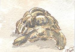 ACEO+Creeping+Watercolour+Painting+Tortoise+002.jpg