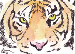 ACEO+Tiger+Proud.jpg