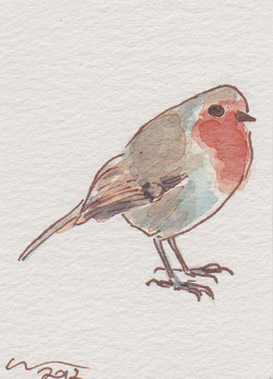ACEO+red+Robin.jpg