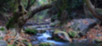 River in Autumn