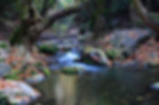 River i höst