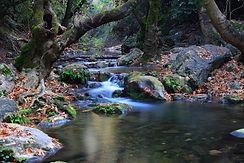 Rivière à l'automne