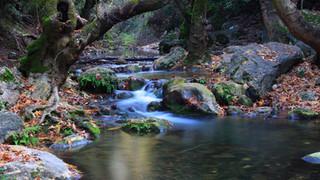 SR4 Autumn River
