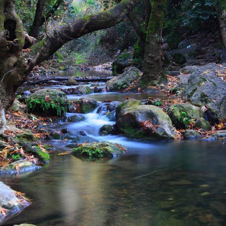 Quiet Waters - Psalm 23:2