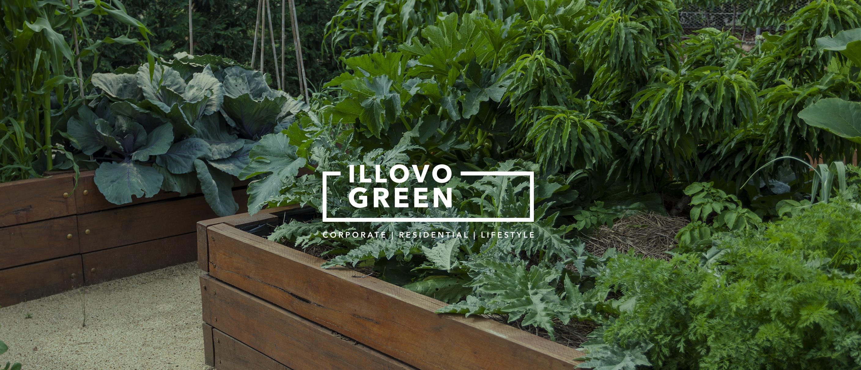 illovo green 12