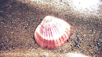 shell-19611_1920_edited.jpg