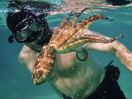 Episode 8 - My Octopus Teacher