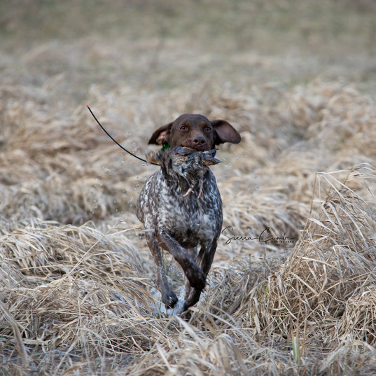 GSP hunting