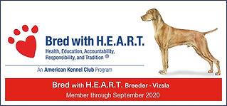 Vizsla breeder of heart