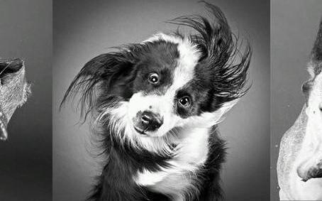 Krijgt uw hond een coronacrisis?