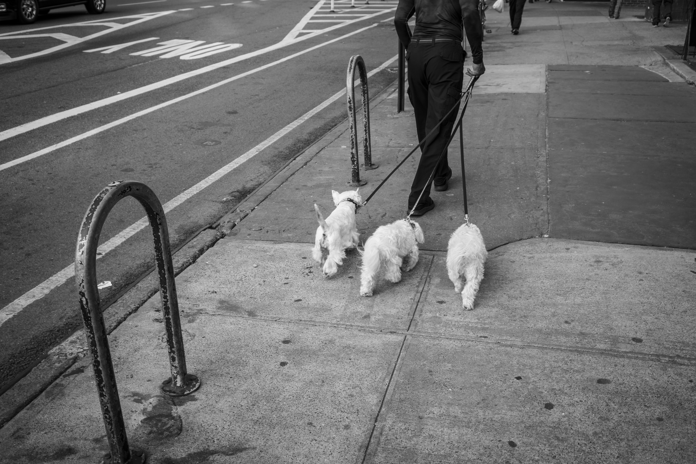 Manhattan, NY, 2016
