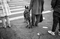 Harlem, NY, 2016