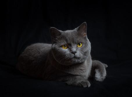 12 ideas para hacer mejores fotografías de mascotas