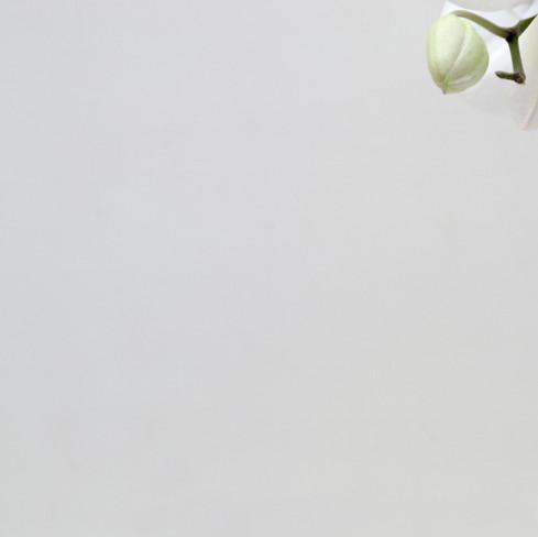 orquidea_2_1_03.jpg
